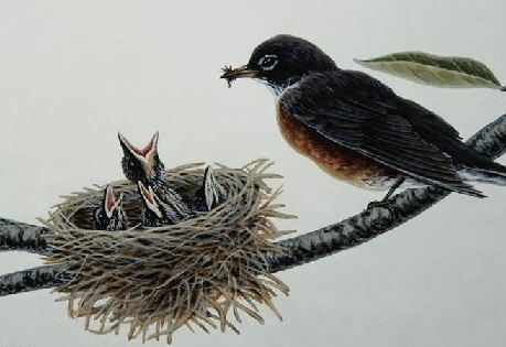 Стриж возле гнезда
