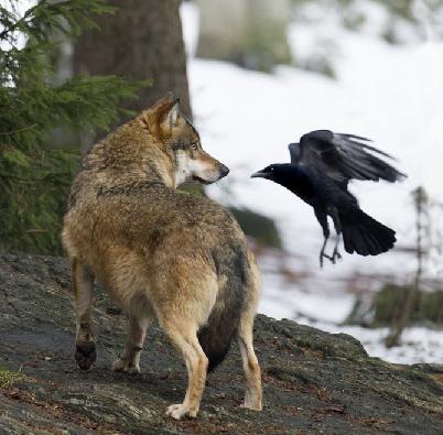 Собака и ворона в городе
