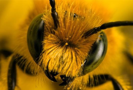 Зрение насекомых