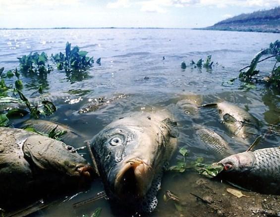Загрязнение морей нефтью