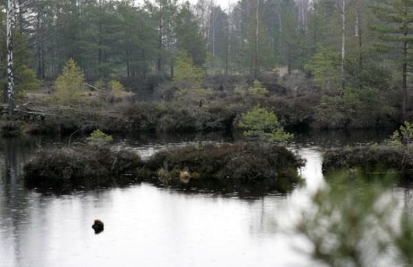Торф на болотах